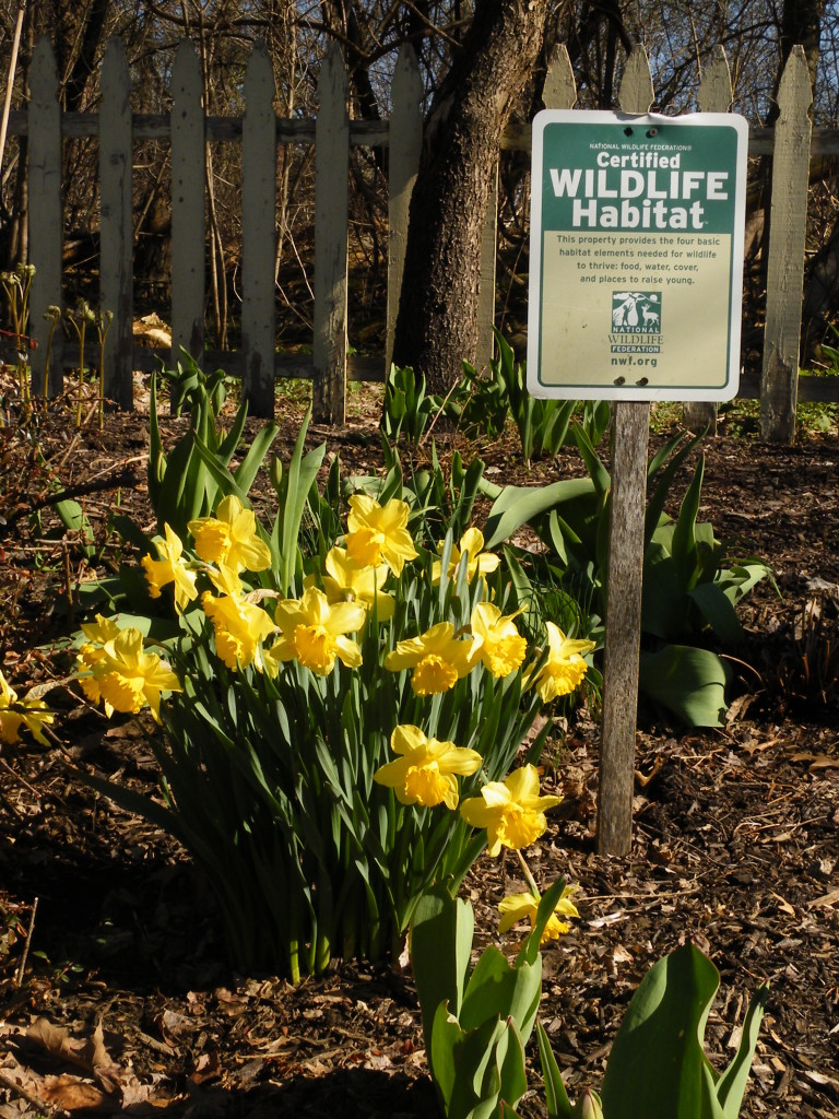 Ballantyne Gardens Landscaping Garden Center Online