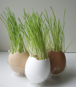 Wheatgrass in eggshells