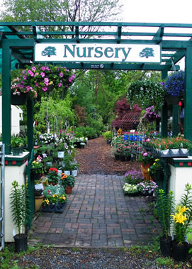 Nursery Gate Plants