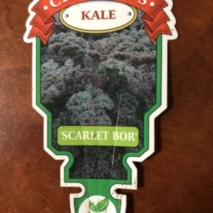 Kale Scarlet-Bor