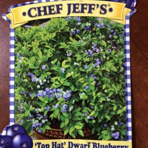 Top Hat Dwarf Blueberry