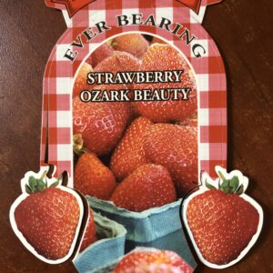 Strawberry Ozark Beauty
