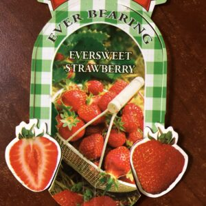 Strawberry Eversweet